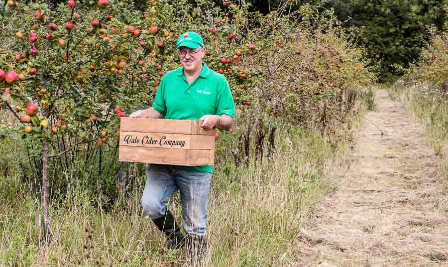 Harvesting-cider-apples-in-the-orchard
