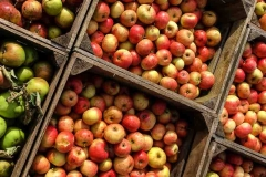 Cider-apples-in-boxes-viewed-from-top