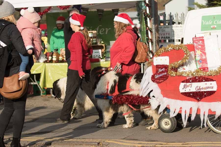 cowbridge-reindeer-parade-dogs-on-float-2018