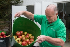 Preparing-apples-for-pressing