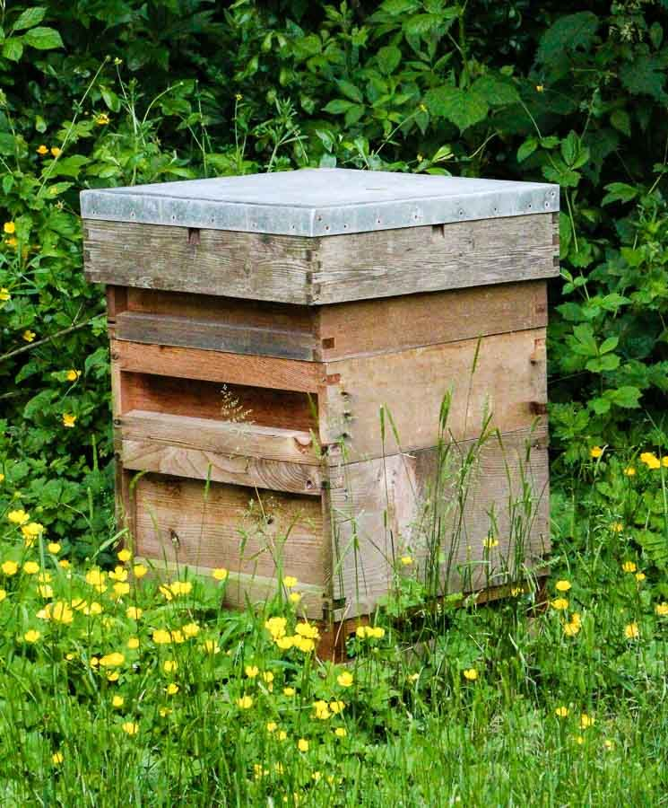 Beehive-in-the-cider-orchard