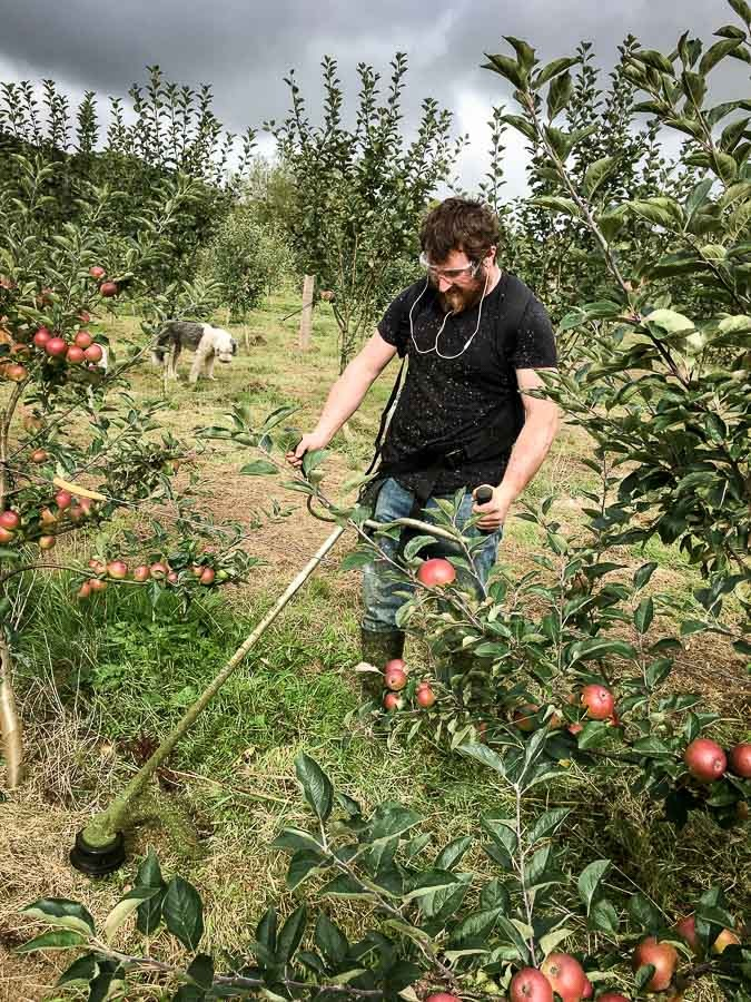 Strimming-the-cider-orchard