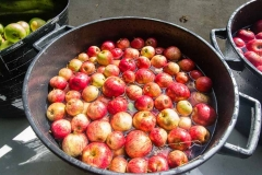 Washing-cider-apples