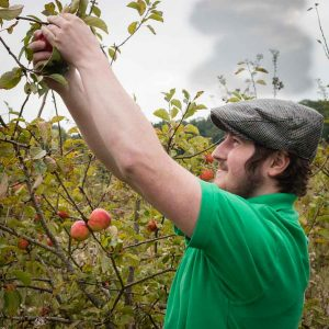 Apple picking a a Vale Cider orchard