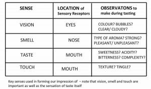 Table showing key senses used in tasting cider