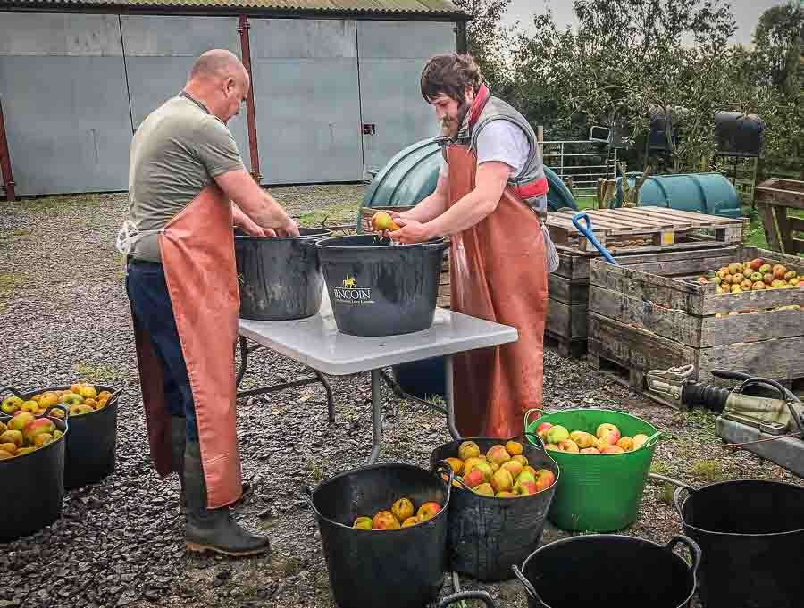 Washing apples at Vale Cider
