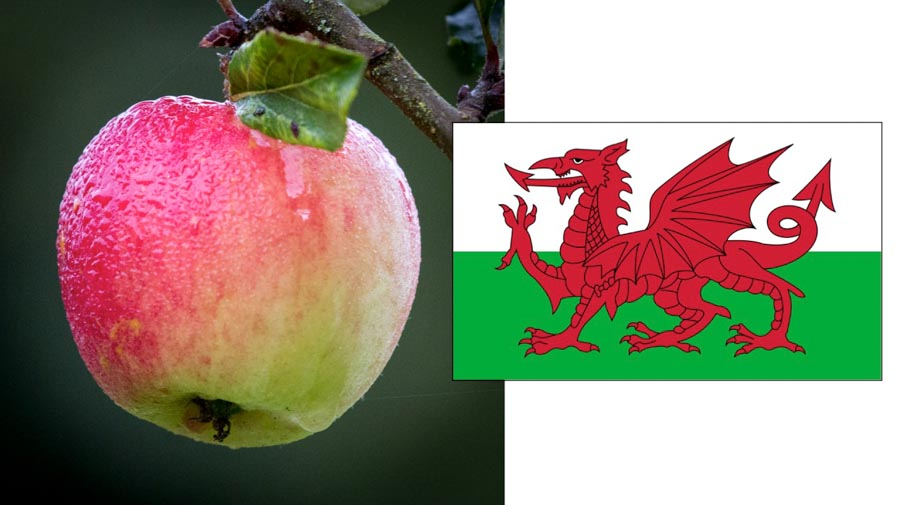 apple and Welsh flag